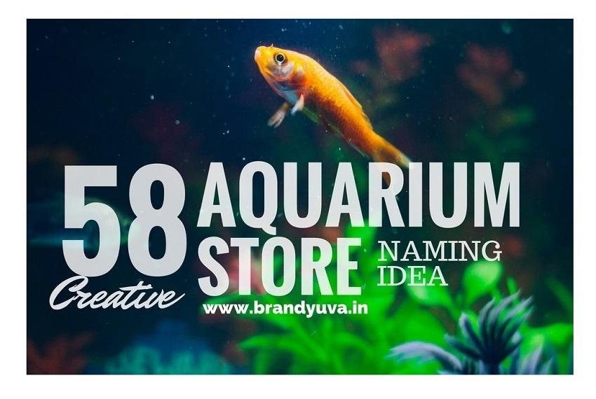 155 Best Aquarium Shop Names Idea Brandyuva In